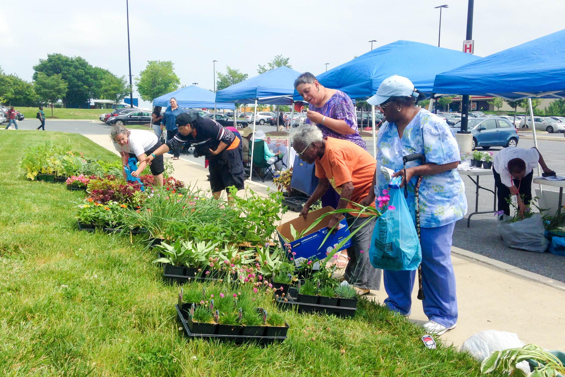 Mondawmin Plant Giveaway